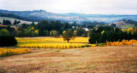 Black Oak Vineyard on bench land in Elkton Oregon