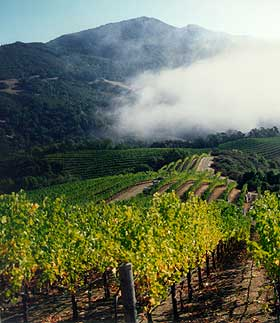 Robert Craig sources his grapes from a number of Napa mountains.