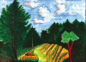 Muccigrosso Vineyards in the Santa Cruz Mountains