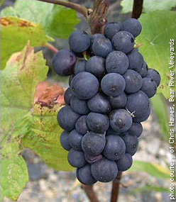 Pinot Noir put the Santa Lucia Highlands on the map.