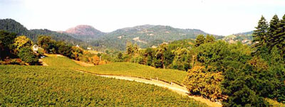 Mount Veeder's rugged landscape