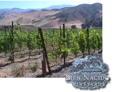 The story of a one of a kind vineyard and its success.