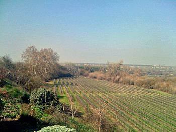 Fresno State Winery Syrah