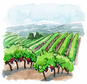 Monte Rosso Vineyard has magical Cabernet fruit.