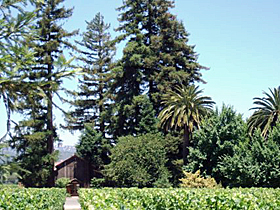 Sequoia Grove's winemaker Michael Trujillo - an interview.